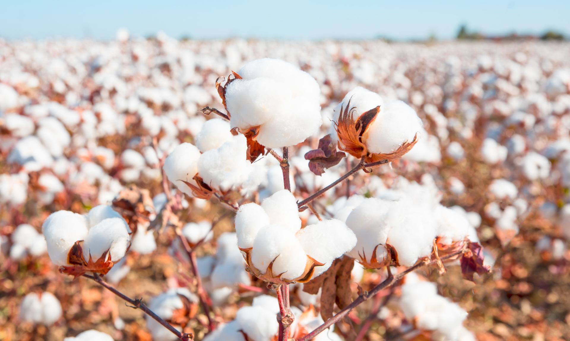 segmentazione del mercato del cotone/cotton market segmentation